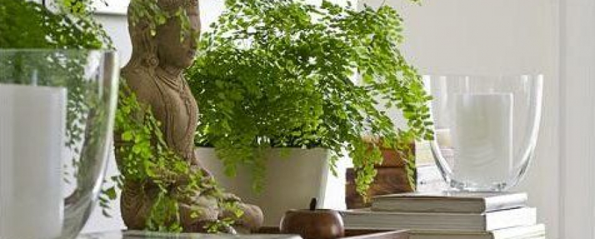 Feng Shui – Be a positive light in your home